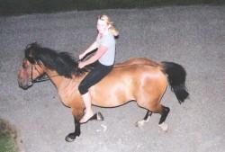 reiten biohof pferde ponies ökohof